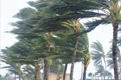 WA Cyclone
